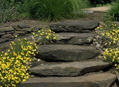 Stone steps creating a path with yellow flowers.